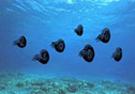 morza zaklęte w skałach