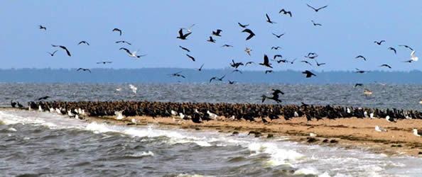 Rewa - Szpërk - kormorany