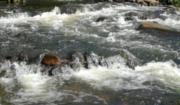 Komunikat o sytuacji hydrologicznej kraju