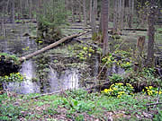 Obszar Chronionego Krajobrazu Puszczy Białowieskiej