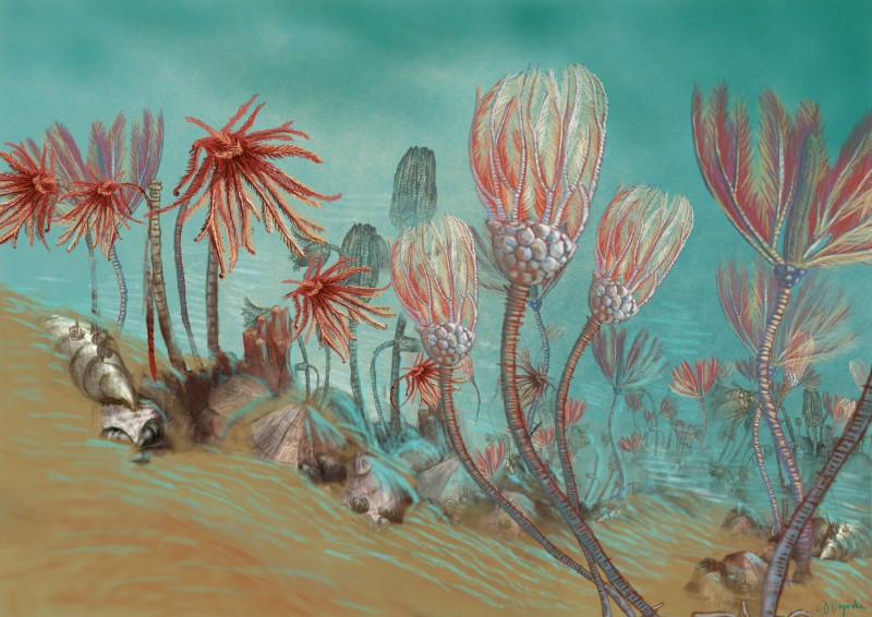 Łąka liliowców